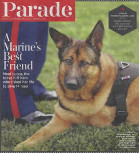 Military Dog Tribute